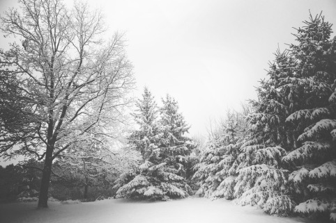 snow-landscape-trees-winter-large