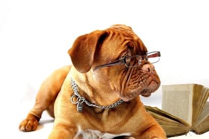 reading-dog